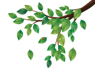 Green Leaves Tree Branch