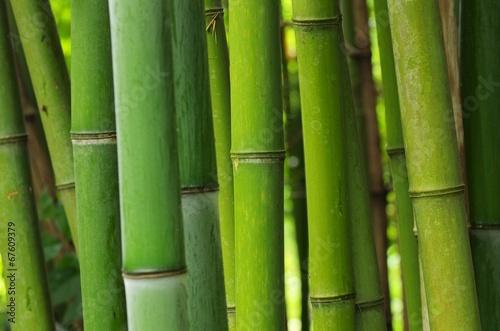 In de dag Bamboo Bambus - bamboo 49