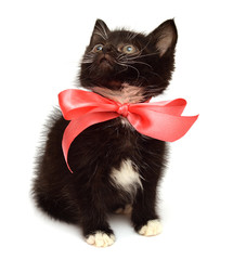 Little kitten with a bow
