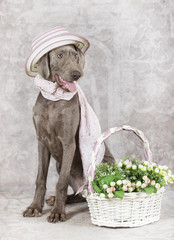 Wirehaired Slovakian pointer dog with flowers