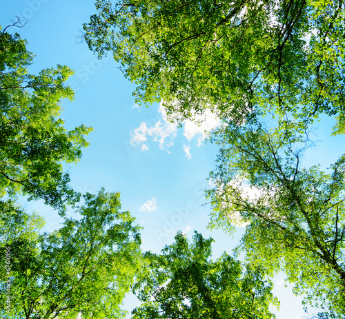 Birch forest on a sunny day. Green woods in summer - 67610156