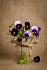 Beautiful pansy flowers on burlap background
