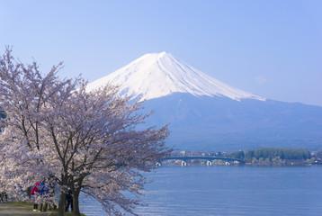 [春の富士山]富士山と河口湖畔の満開の桜-271
