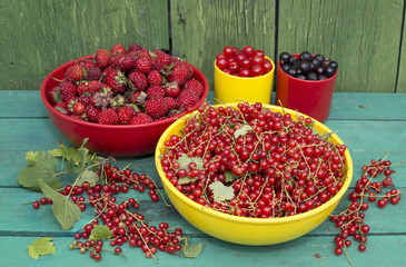 Summer gather of berries