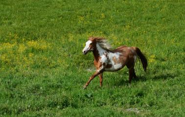 cavallo nella prateria
