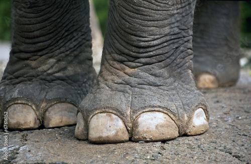 Foto op Canvas Olifant Elephant feet.
