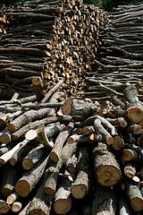 Wood pile background