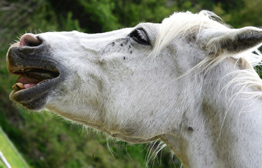 ritratto cavallo