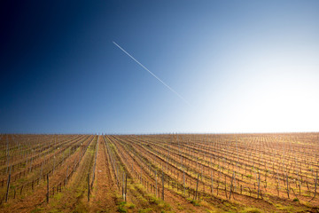 Sunrise over a vineyard