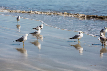 Seagulls in Surf with Reflections