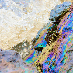 crab and rainbow reflection of crude oil spill