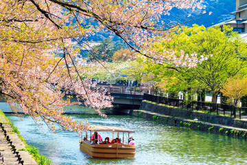 Sakura season in Kyoto, Japan