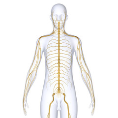 Nerves with body