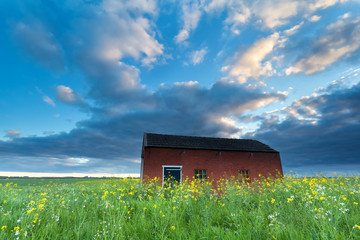 farmhouse on flowering meadow