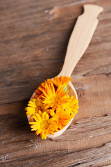 Calendula in wooden spoon on table close-up
