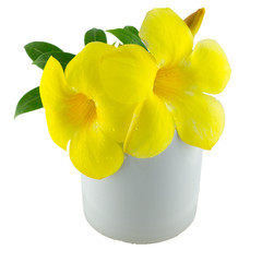 Yellow flower cup on white isolated background