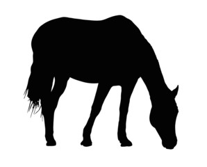 Portrait Silhouette of Large Horse Grazing