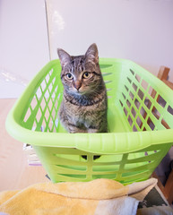 Cat in a green basket