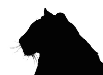 Portrait Silhouette of Large Tiger Face