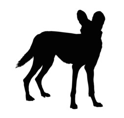 Silhouette of Alert Wild Dog