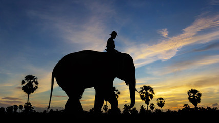 Elephant at park on twilight time