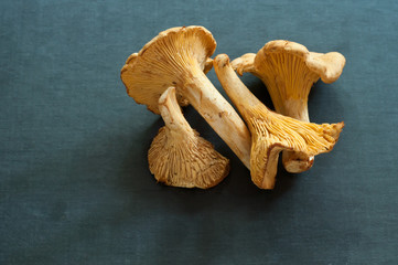 group of chanterelles