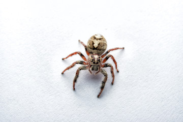 Super macro spider portrait