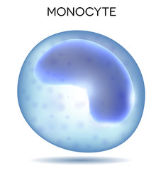 Human blood cell Monocyte