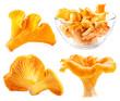 Edible wild mushroom chanterelle (Cantharellus cibarius) isolate