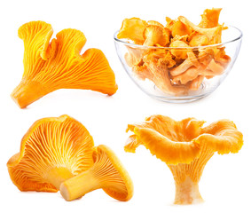 Edible wild mushroom chanterelle (Cantharellus cibarius) isolate