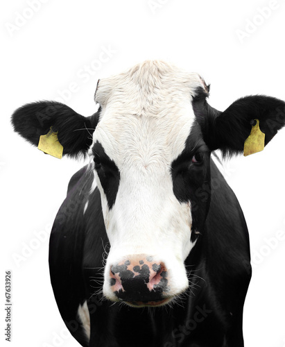 Poster Koe Funny cow isolated on a white background.