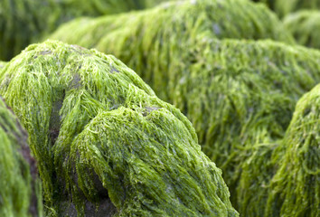 Green moss on rocks