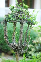 Beautiful bush in shape of lantern in garden