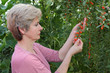Agriculture, woman agronomist examine goji berry fruit in hands