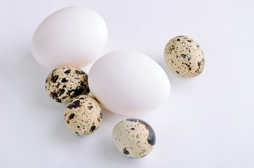 quail and white eggs on the light background