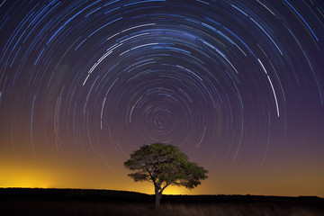 Star trail with lone tree brown grass and soft light