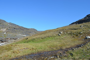 Subarctic dwarf shrub tundra in summer in Sweden