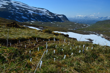 plots for an ecological experiment in the mountains