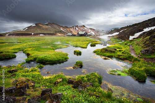 Fotobehang Watervallen Fresh blooming flowers in Landmannalaugar, Iceland