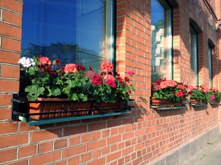 windows with a flowers