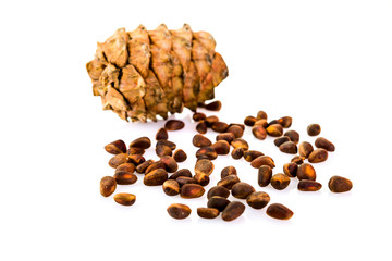 cedar pine cones with nuts isolated on white background