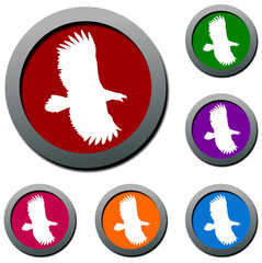 eagle  bird set of colorful vector icons