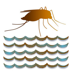 Yellow Fever mosquito, standing water, isolated on white