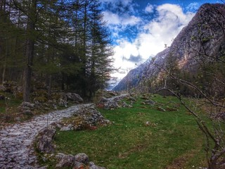 Risalendo verso i boschi alpini