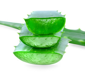 Aloe vera isolated on white background.