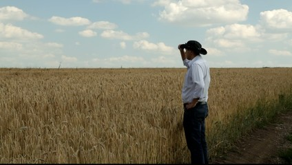 Man looking at a field of wheat