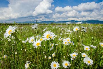 Entspannung pur: Blumenwiese in der Pfalz :)