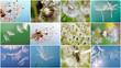 Collage: wünschen, träumen, hoffen :)
