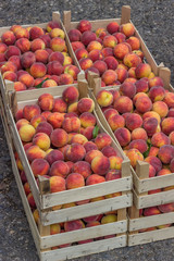 Farmers market peaches in a wooden crates 2