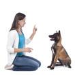 Frau übt Sitz mit Junghund